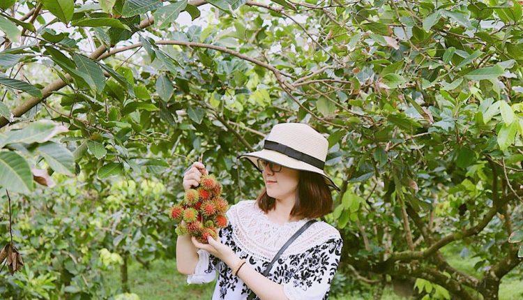 vườn trái cây ở bến tre