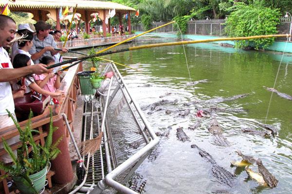 Câu cá sấu ở Cồn Phụng Bến Tre