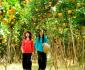 Top 10 Vườn Trái Cây nổi tiếng ở Bến Tre