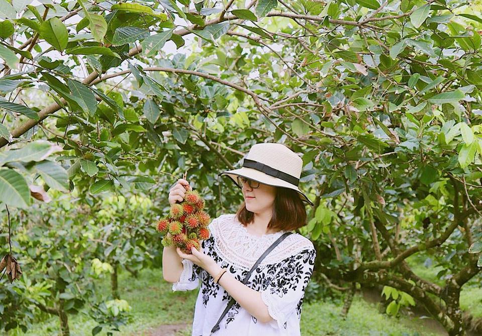 vườn trái cây chính thương