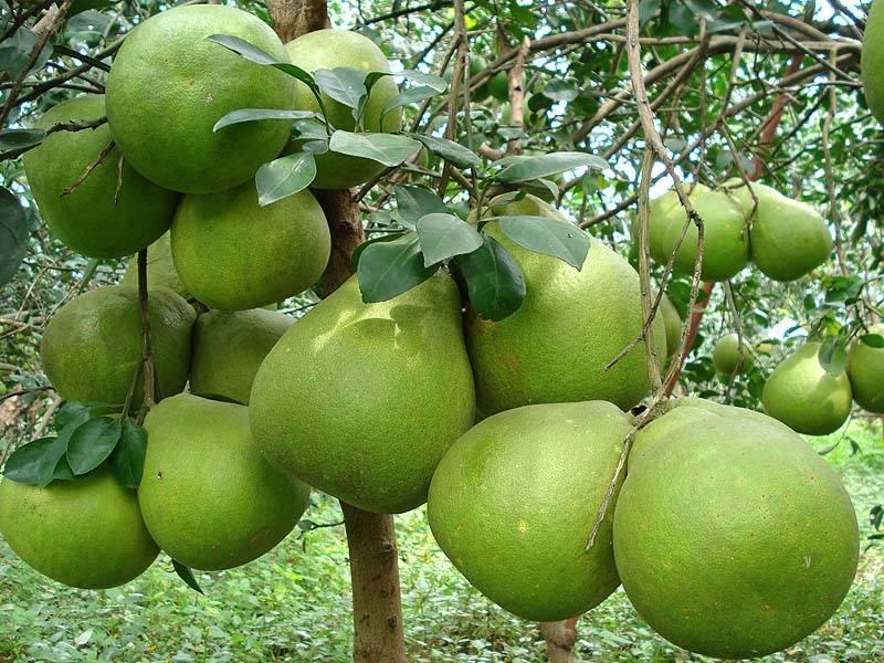 vườn trái cây vĩnh kim ở Tiền Giang